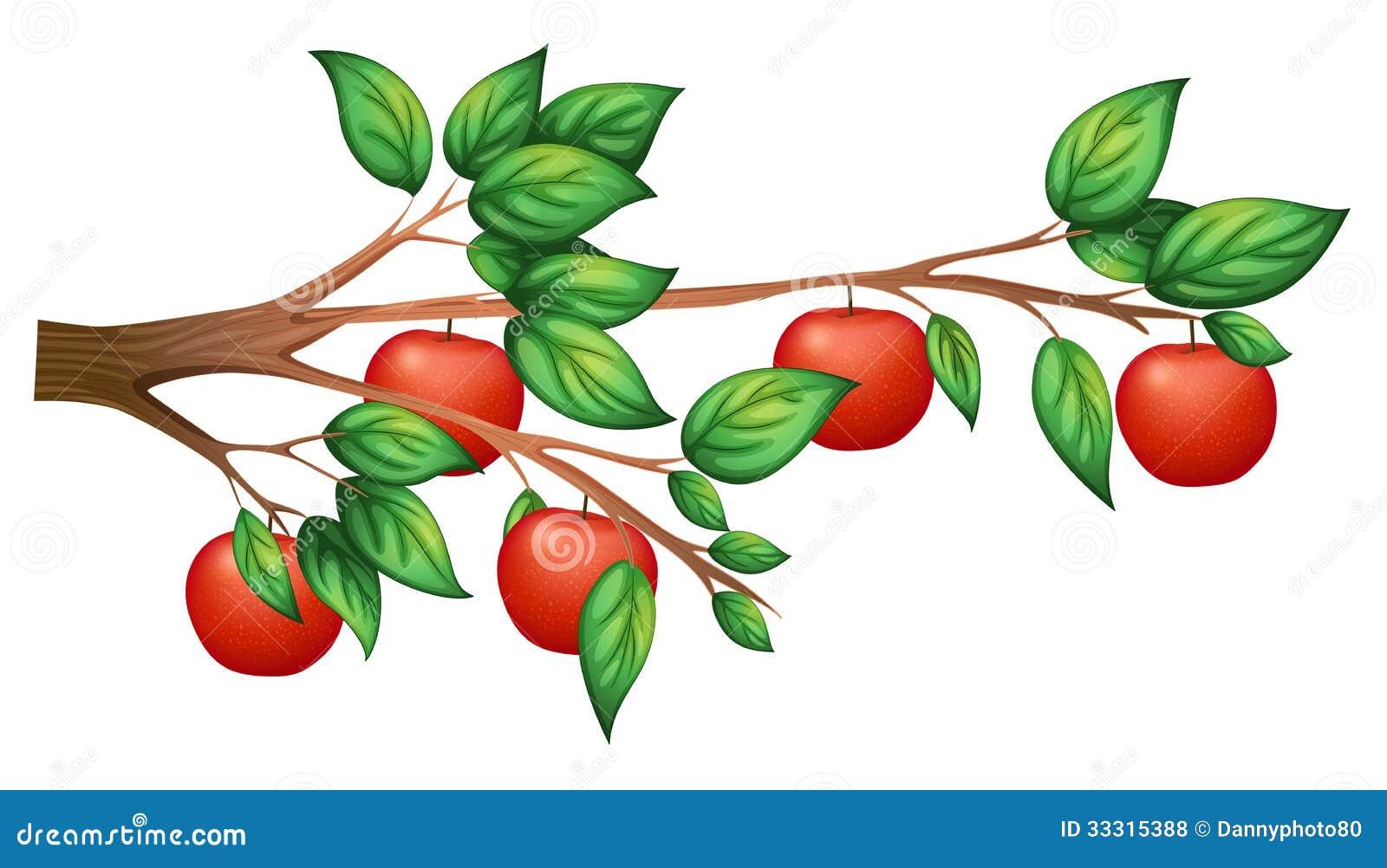 Ett äppleträd
