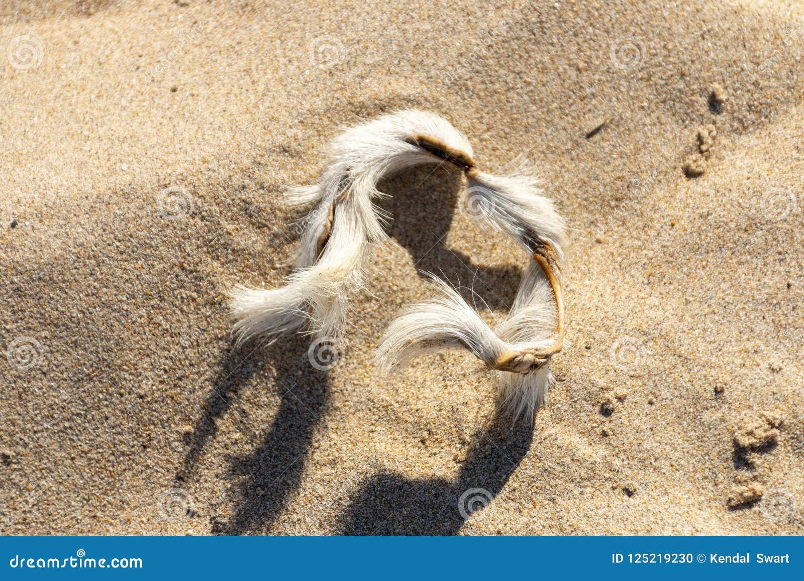 Ett armband på sanden