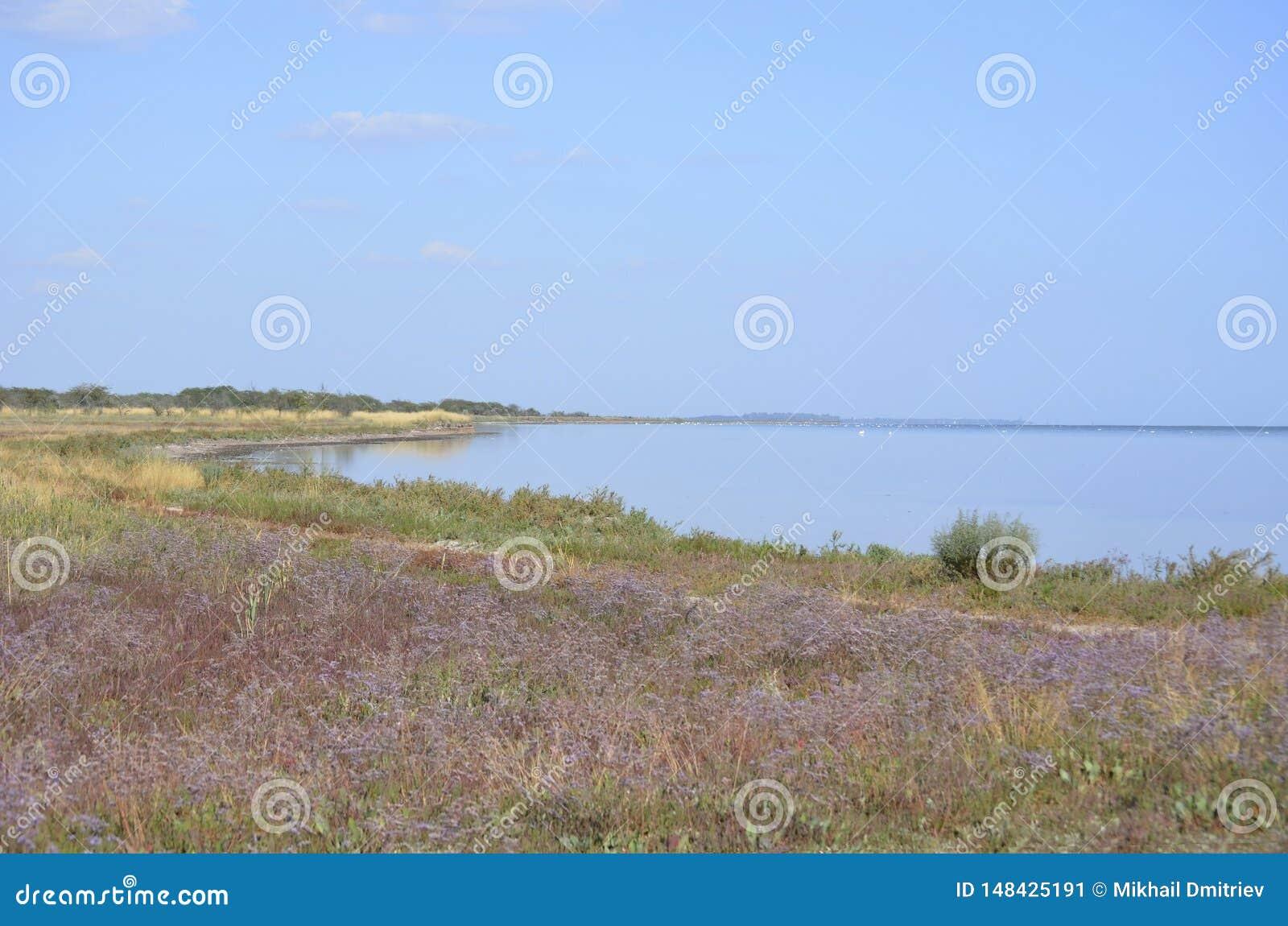 Ett fält av blommiga puurpurblommor vid havet