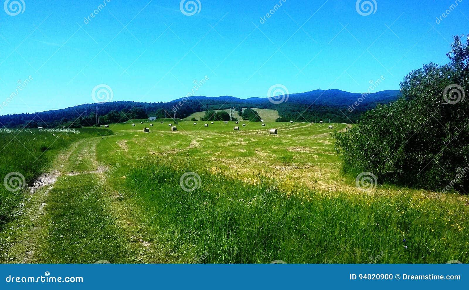 Ett fält med kärvar av hö
