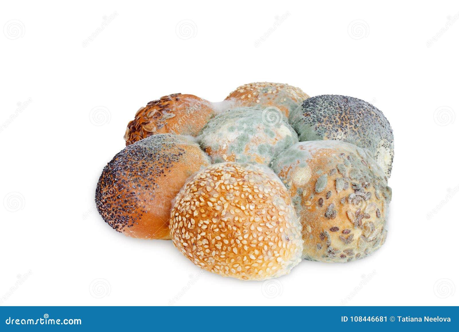 Ett foto av formen som växer gammalt bröd med frö som isoleras på vit bakgrund Matförorening, bad spolierade äckligt ruttet vete