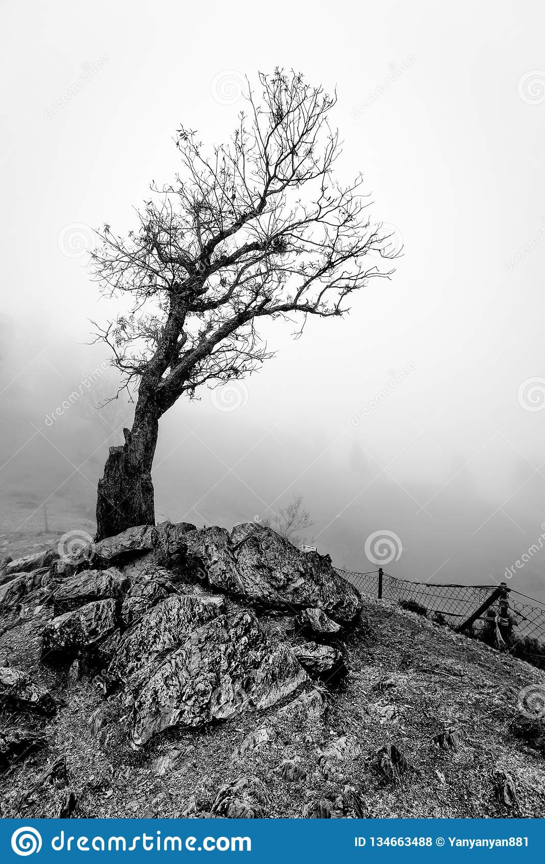 Ett gammalt avlövat kusligt träd