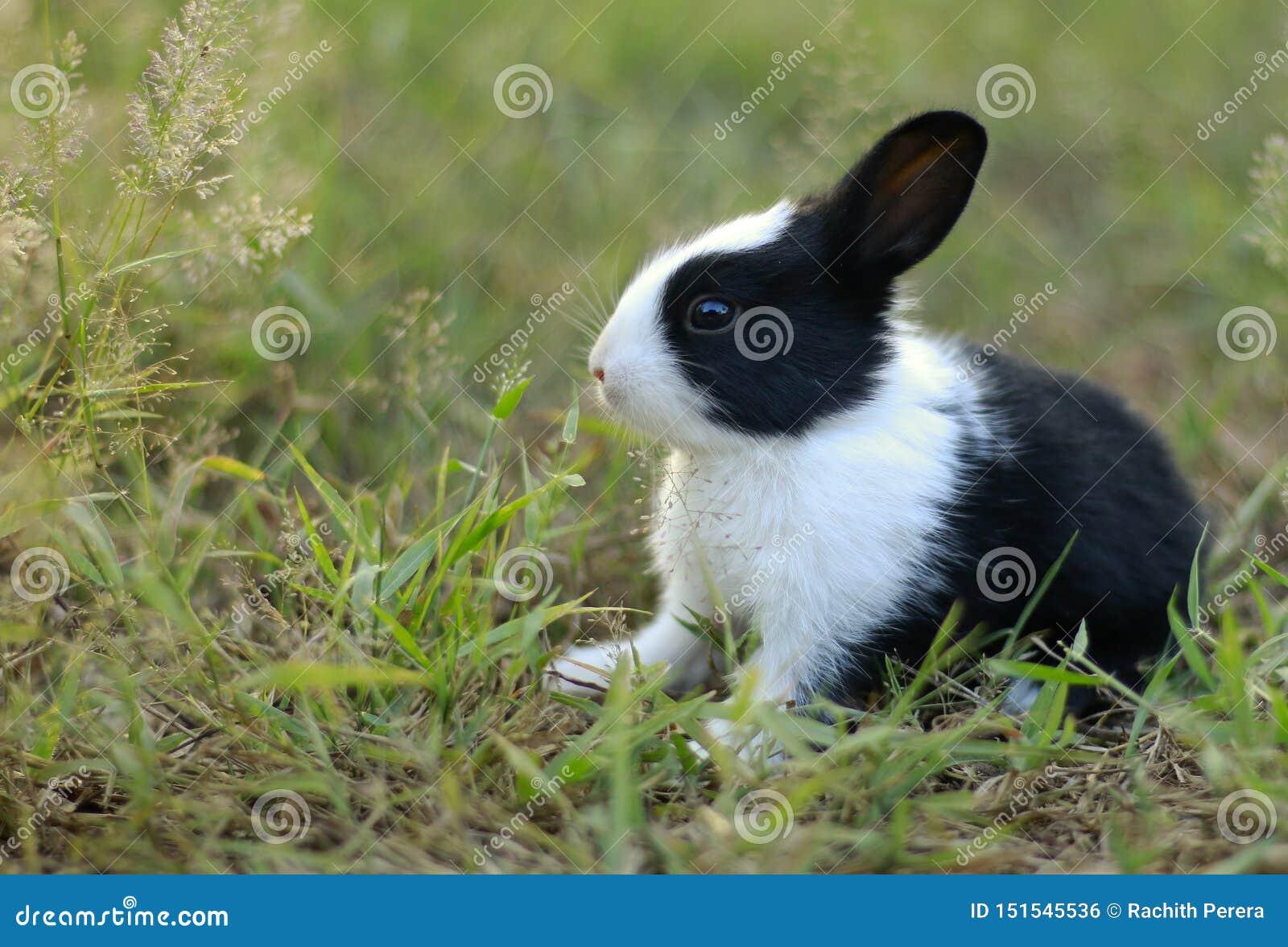 Ett gulligt behandla som ett barn kanin på gräs