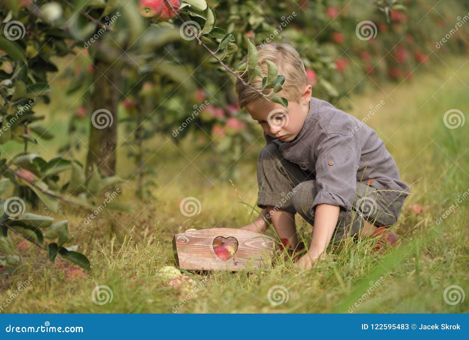 Ett gulligt och att le pojken väljer äpplen i en äpplefruktträdgård och innehav ett äpple