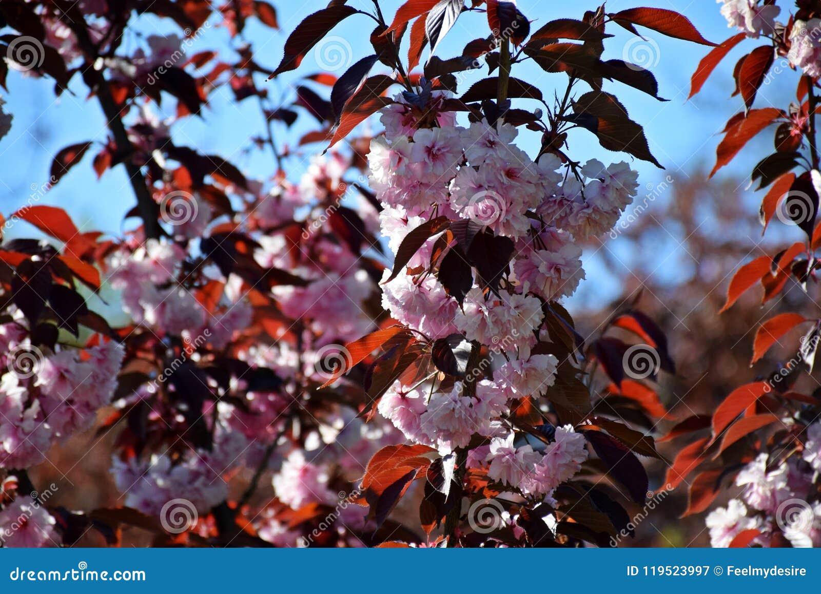 Ett härligt träd blomstrade i trädgården, vår