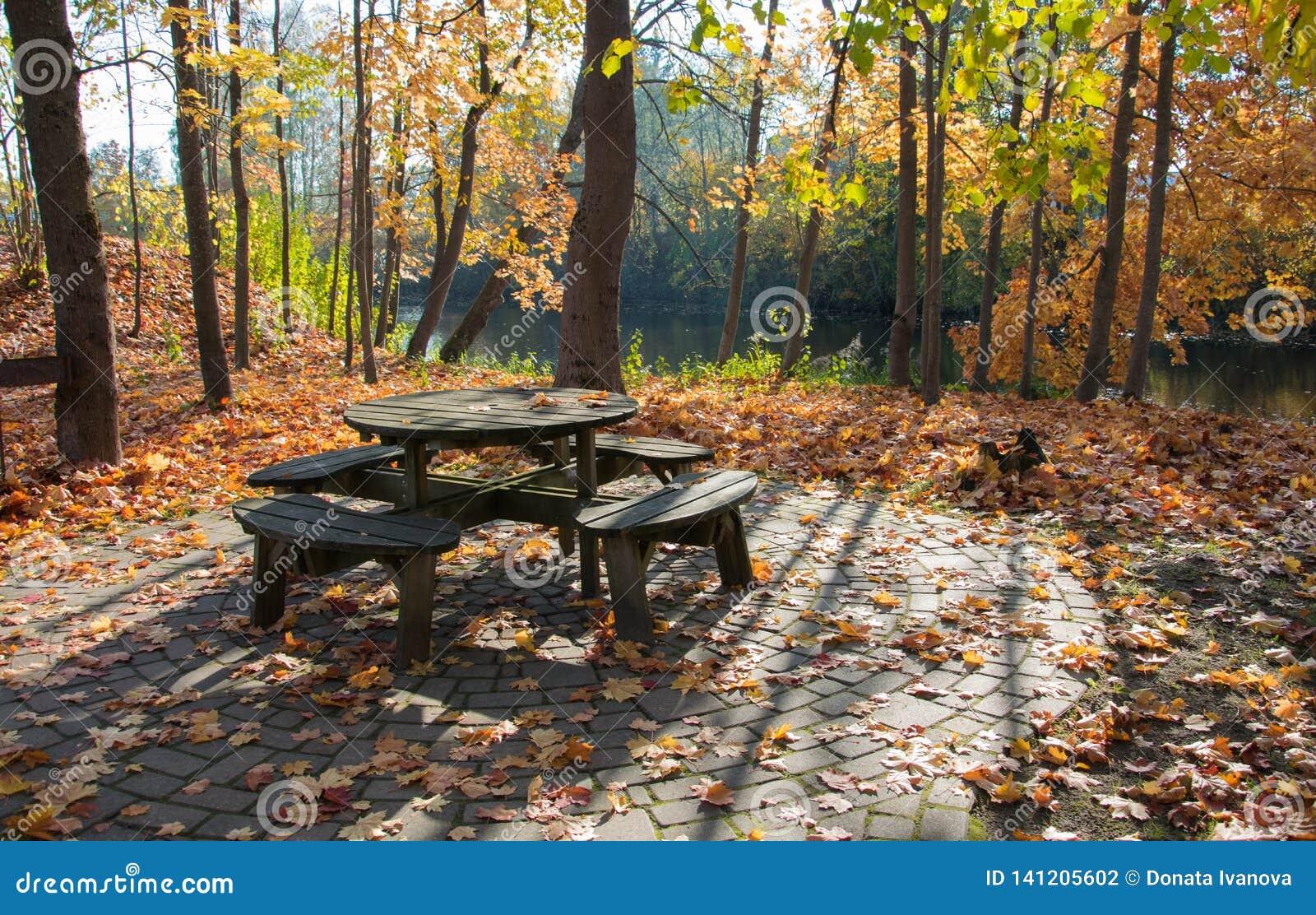 Ett hemtrevligt hörn för att koppla av i hösten parkerar på en ljus solig dag Guld- höst