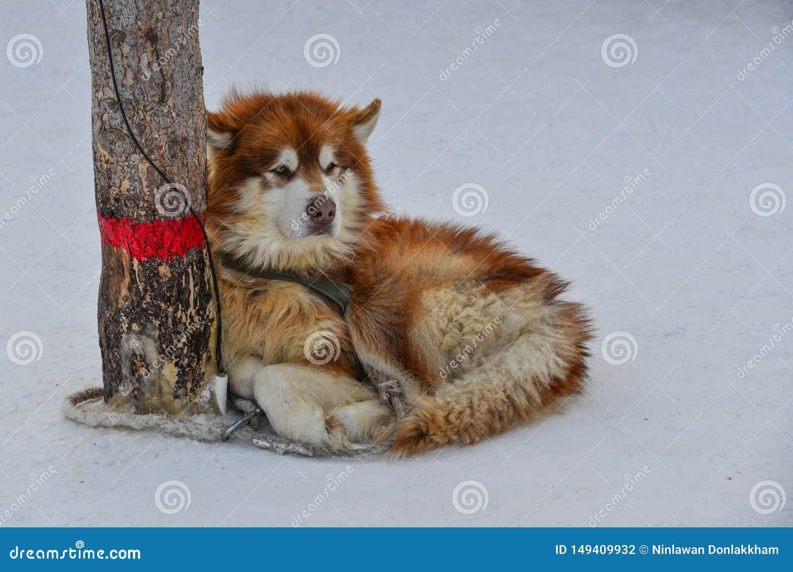 Ett hundanseende på snö