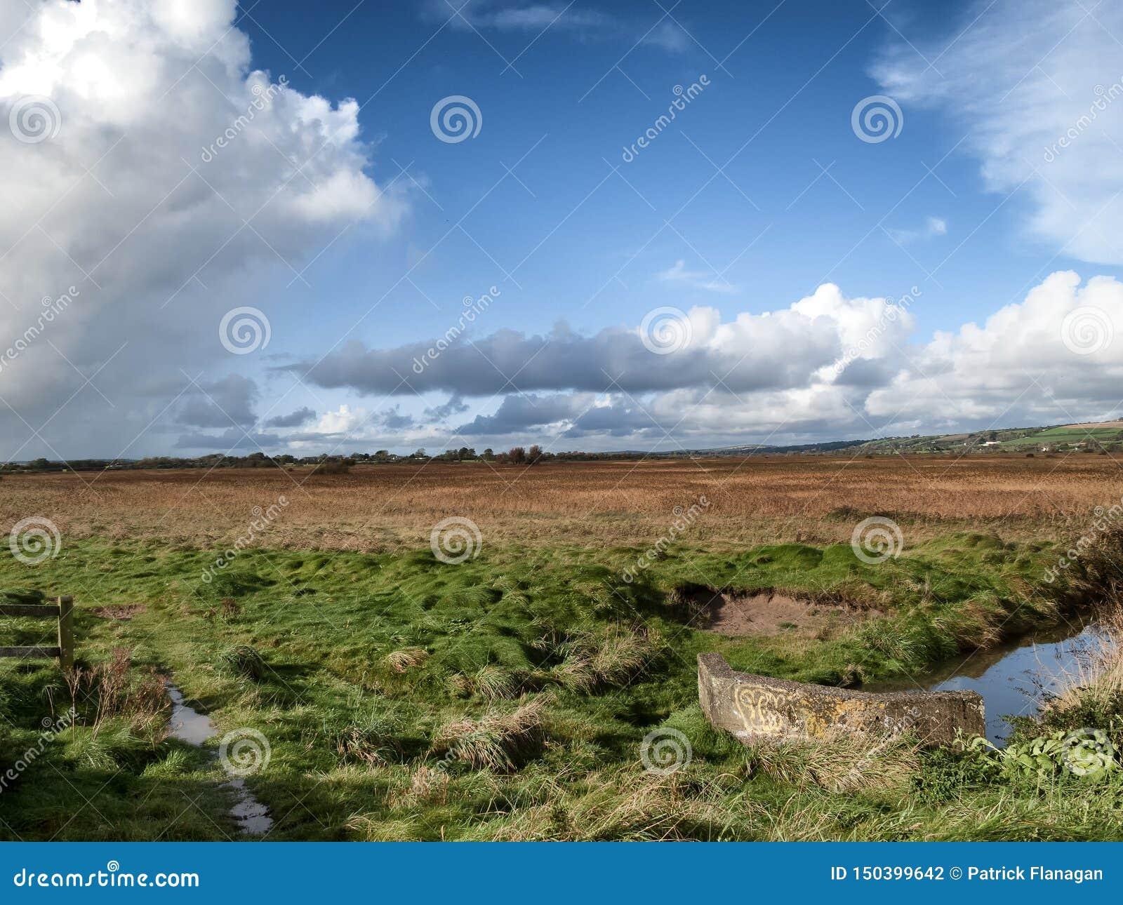 Ett irländskt landskap med en äng och en ström som kör till och med den