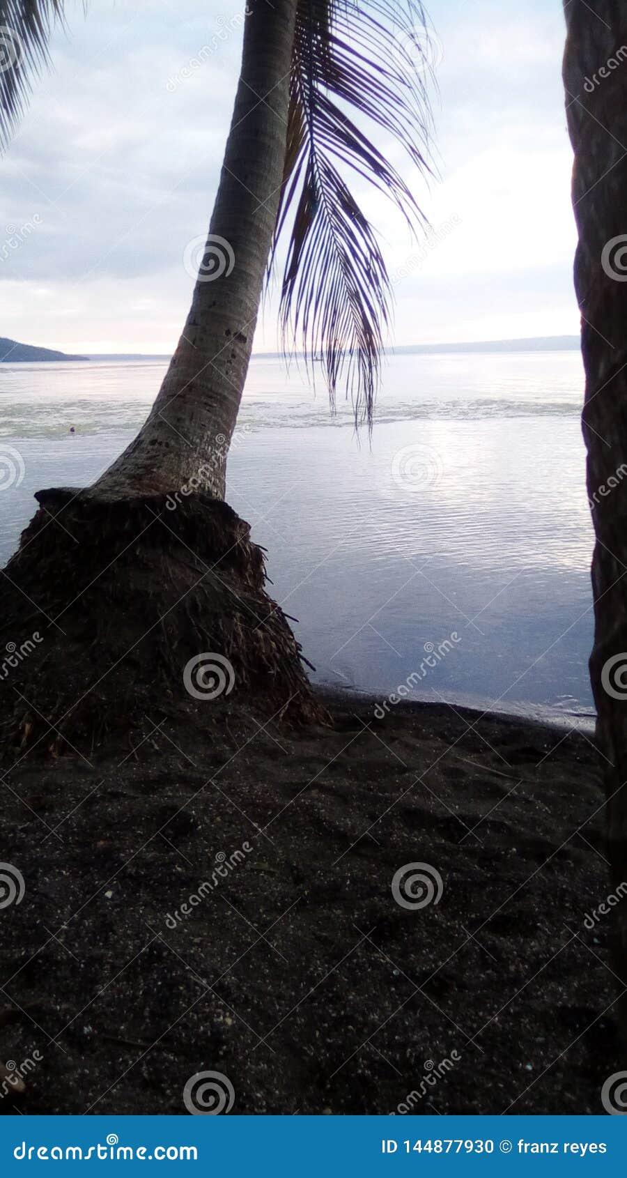 Ett landskap av havet och trädet medan tid för solnedgånglr-gryning
