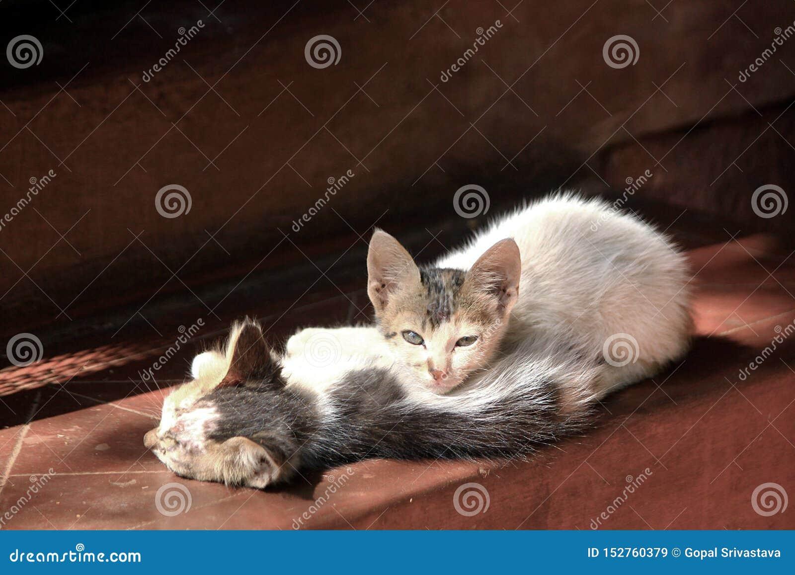 Ett par av kattungar som värma sig i morgonsol