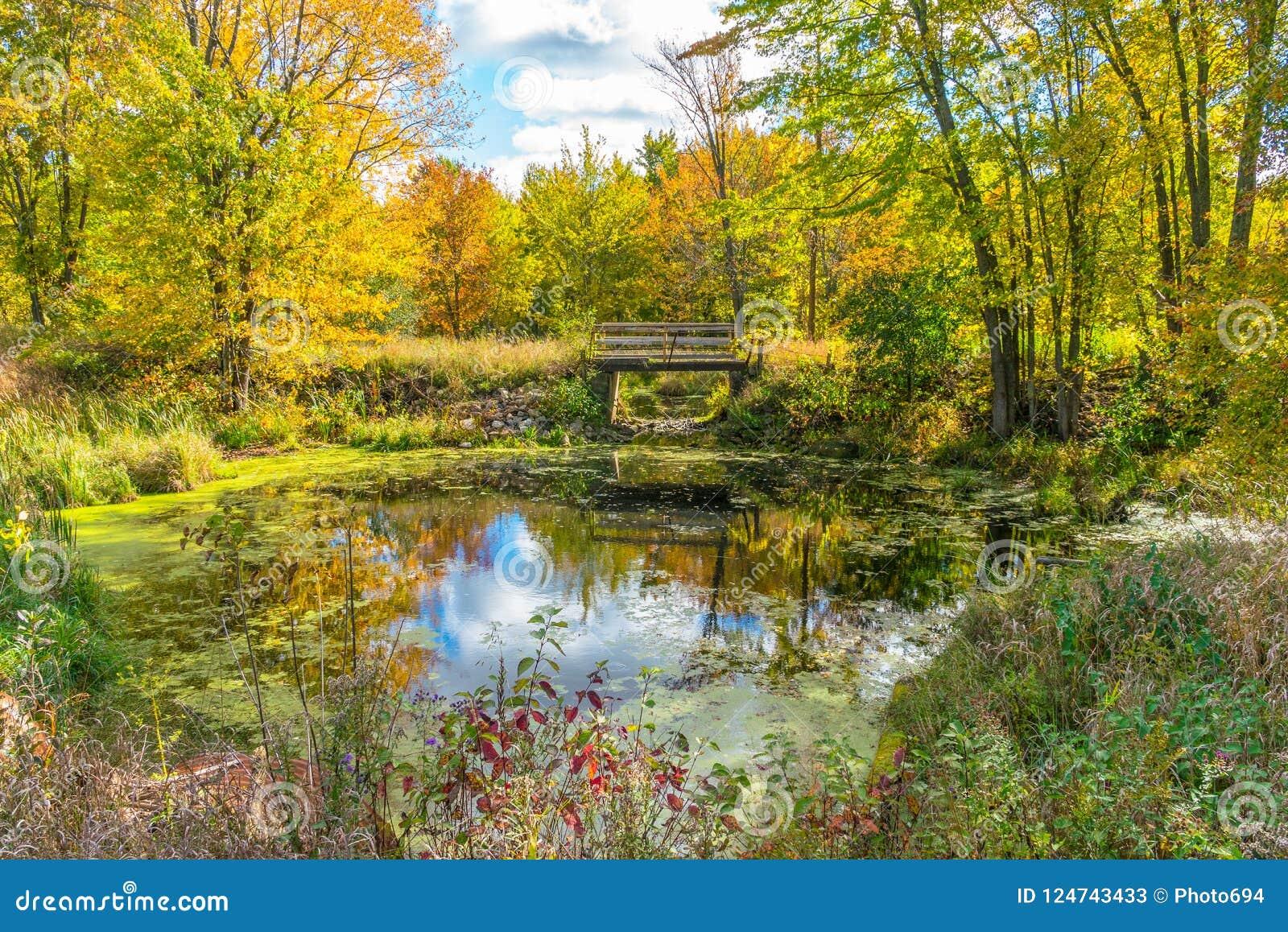 Ett pittoreskt landskap för höstskogreflexion med spången över dammet