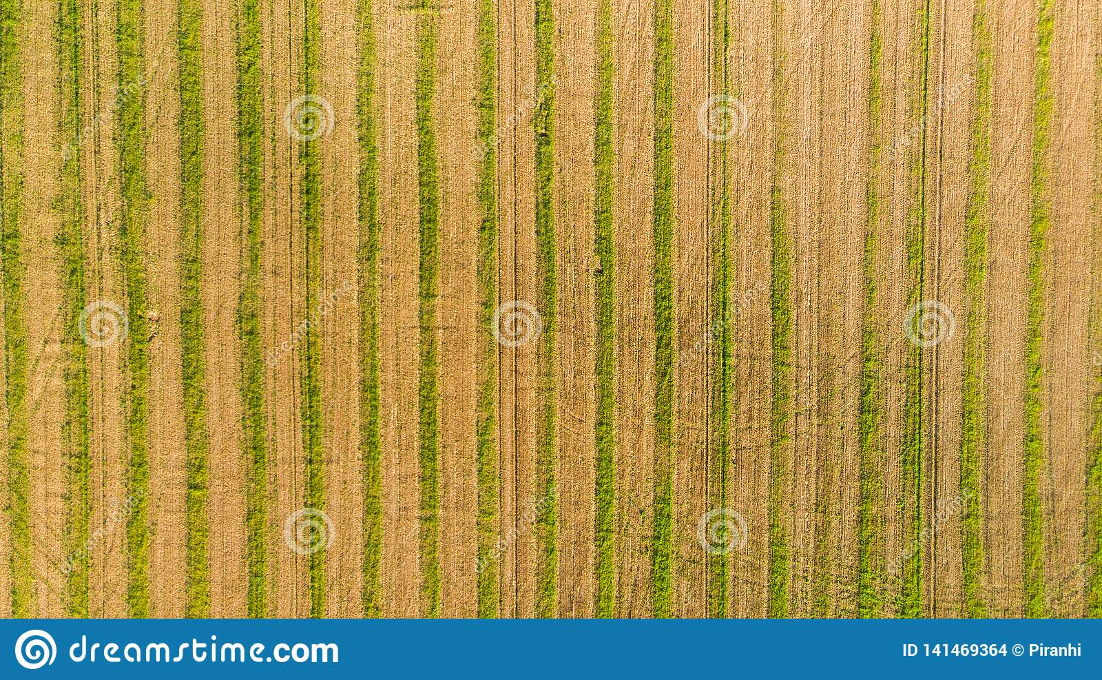 Ett skördat vetefält