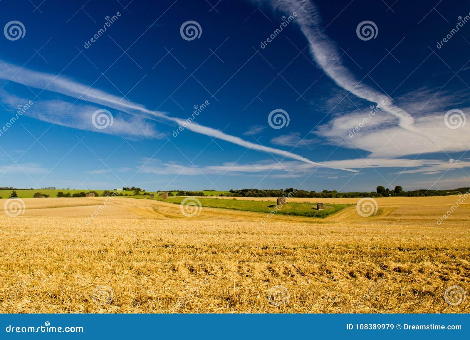 Ett skördfält i Danmark