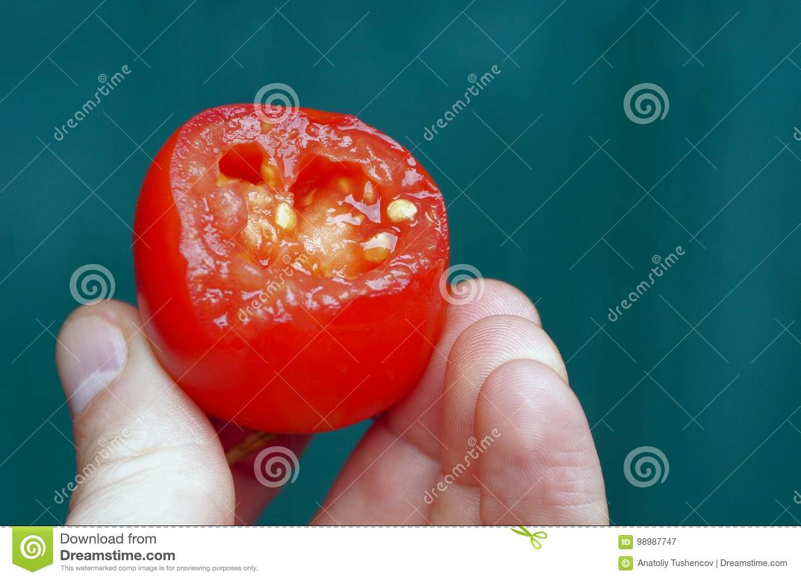 Ett stycke av den röda tomaten på fingrar på en grön bakgrund
