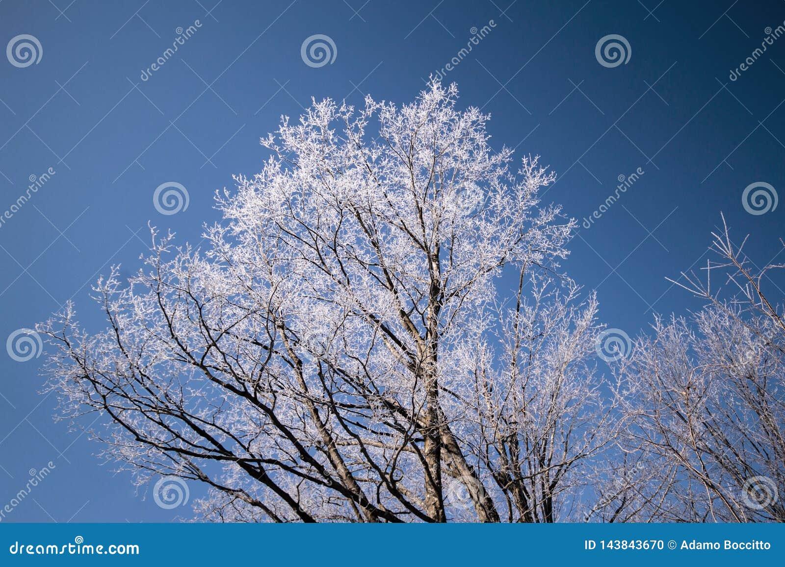 Ett vinterträd med dess filialer som frysas i is