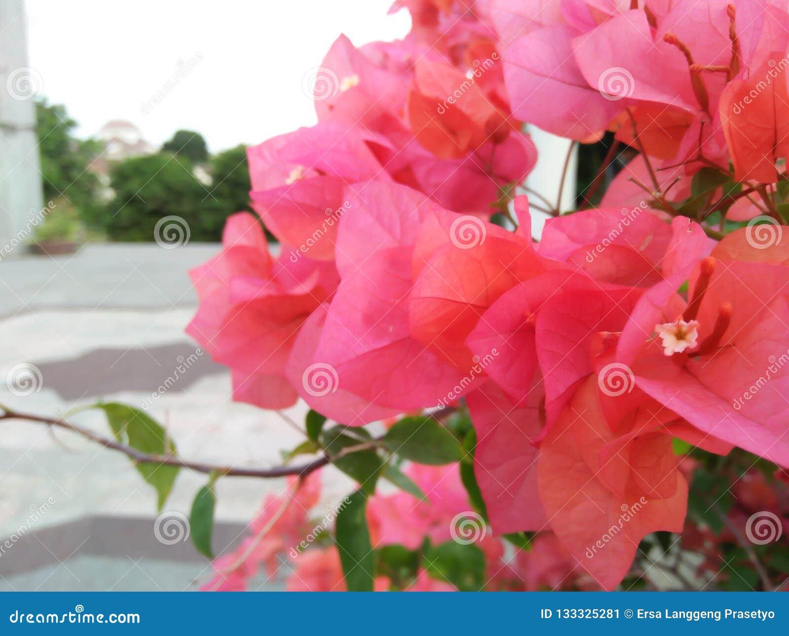 Eu capturei fotos de flores vermelhas