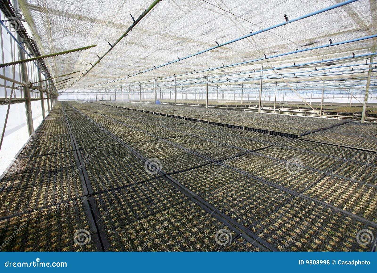 cassava plantation business plan