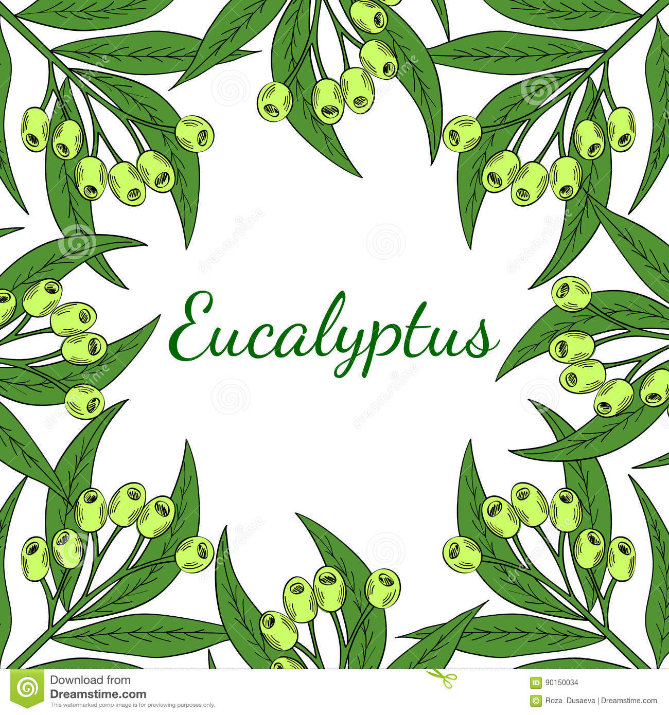 Eucalyptus Square Banner In Color Stock Vector Illustration Of Hair Isolated 90150034