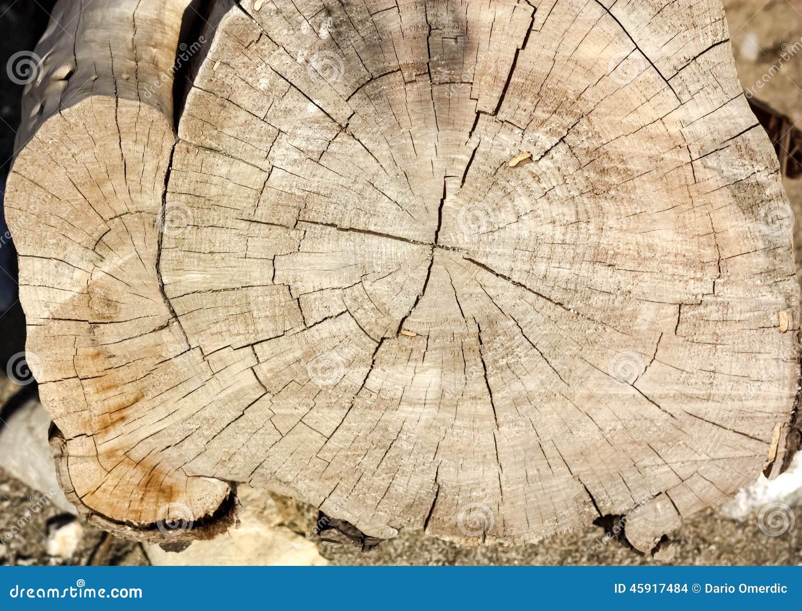 Eucalyptus Ring Of Death