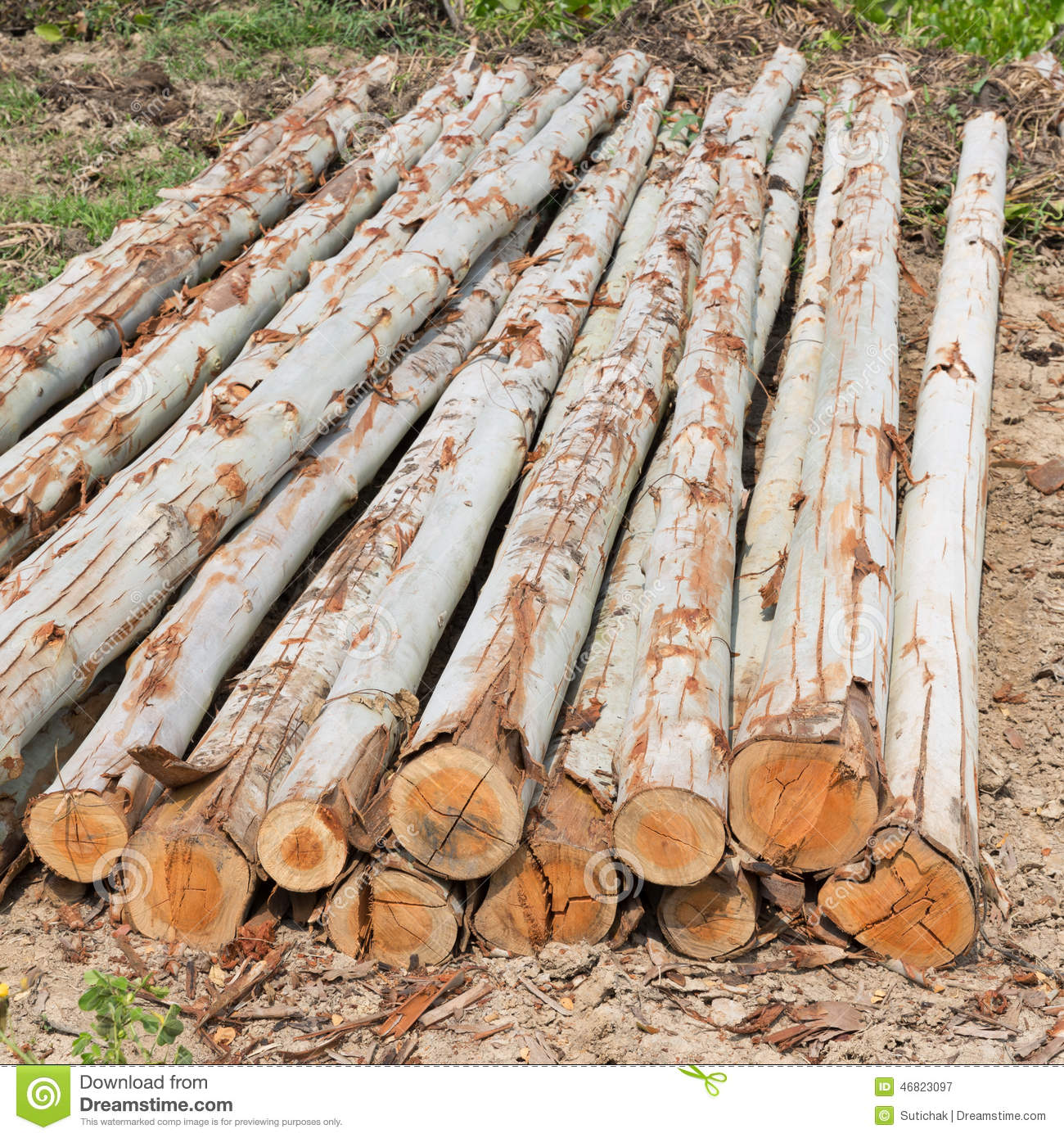 Eucalyptus tree pile of wood logs for industry stock for What to do with tree logs