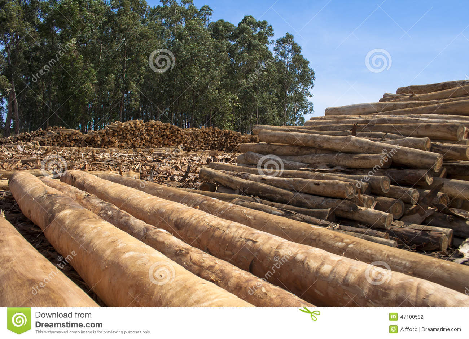 Eucalyptus Tree Stock Photo Image Of Logs Construction 47100592