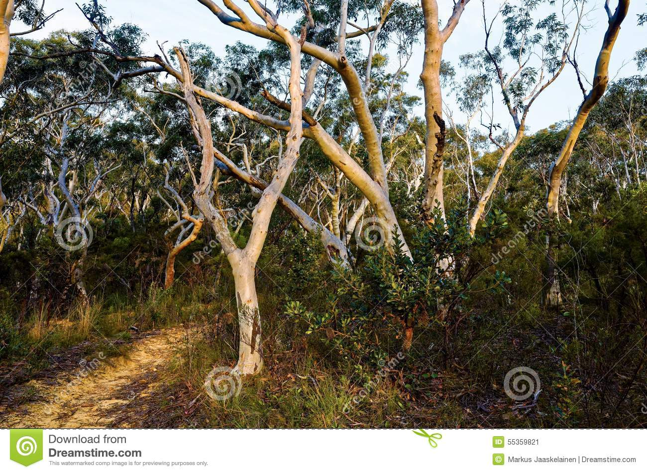 Dry Sclerophyll Forests - Steve Parish Nature Connect