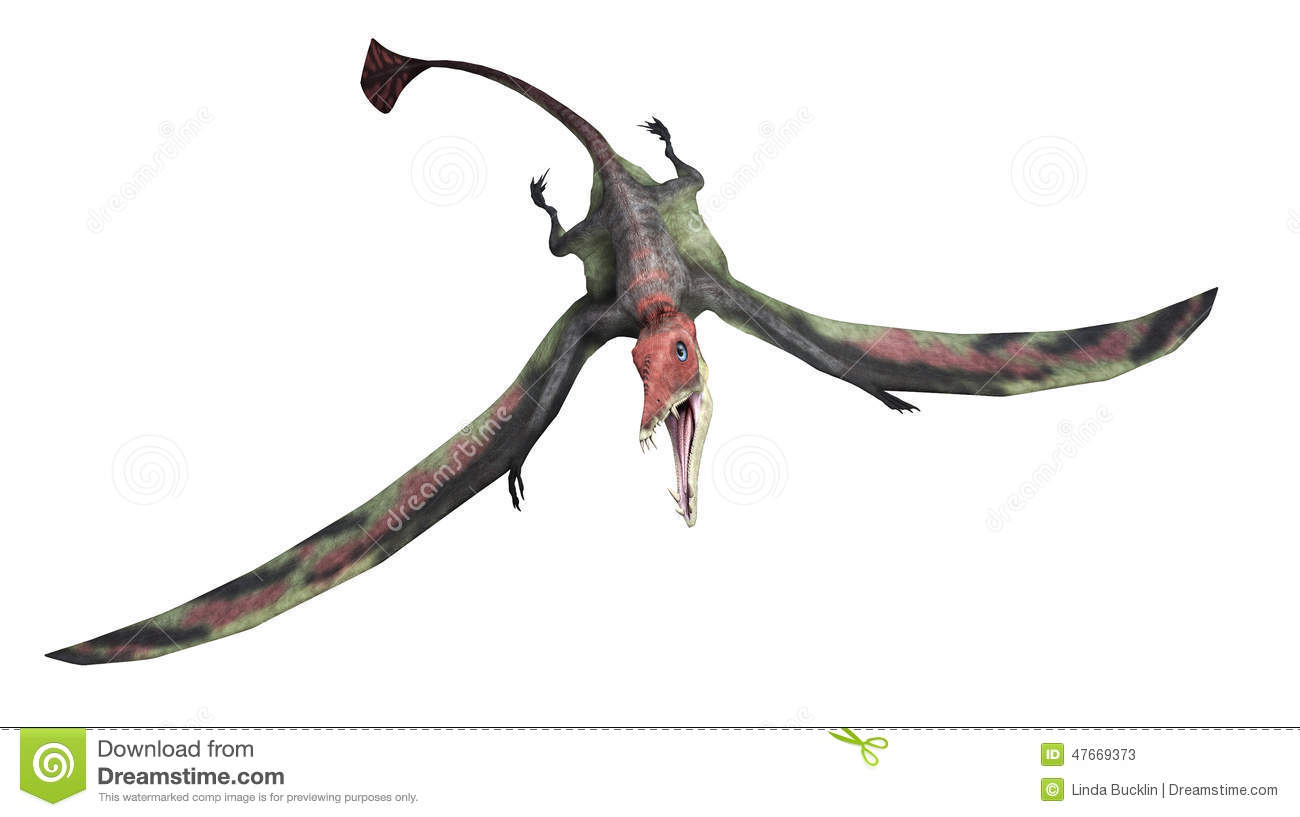 The Eudimorphodon was a flying reptile that lived during the Triassic ...