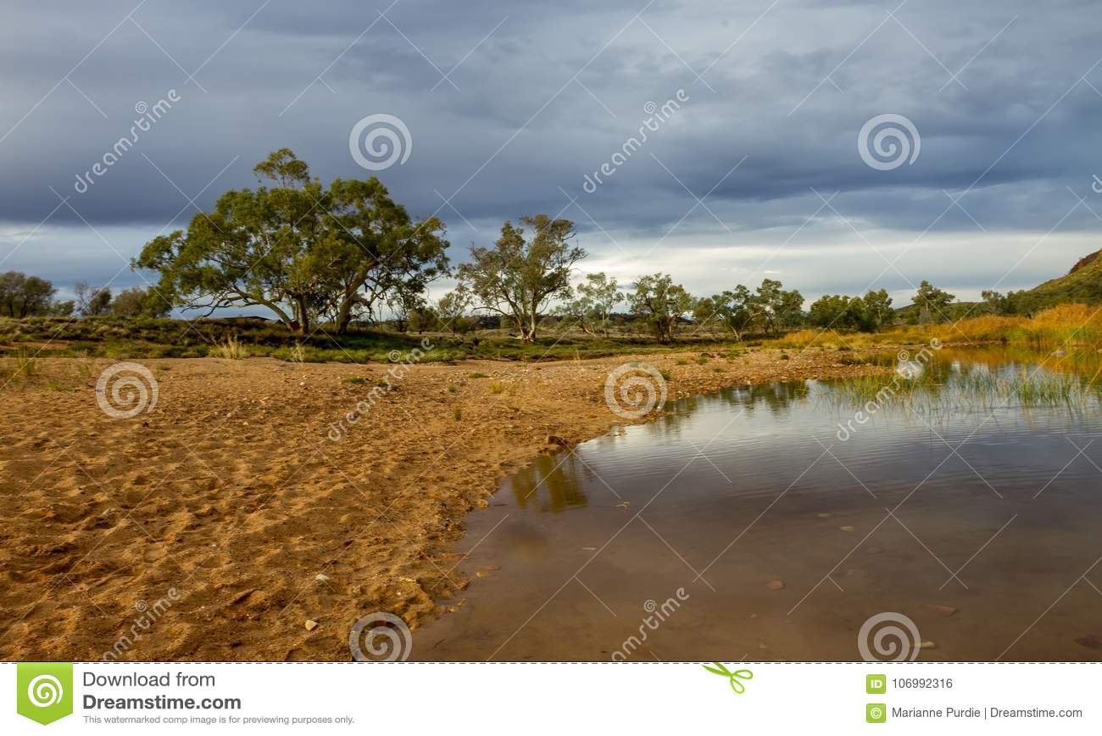 Eukalyptus nahe dem Glen Helen Gorge-waterhole