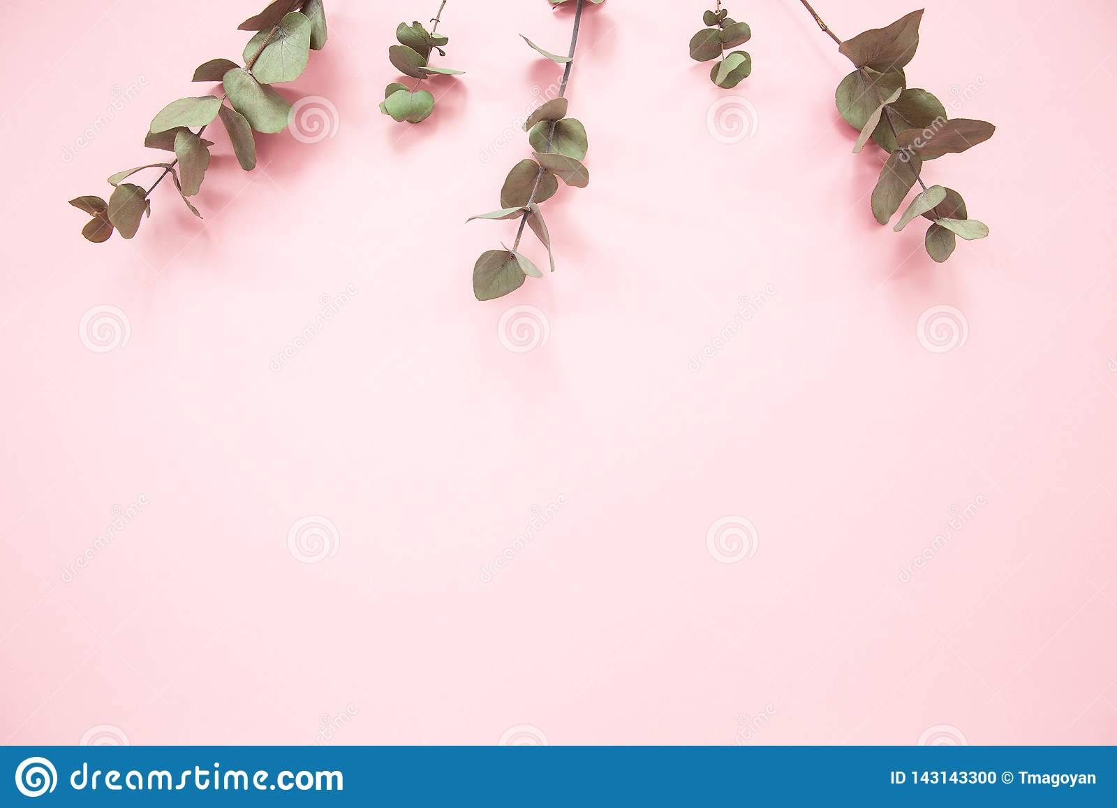 Eukalyptusniederlassungen auf tausendjährigem rosa Hintergrund mit Kopienraum Eukalyptus auf Oberkante Minimalismusebenenlage