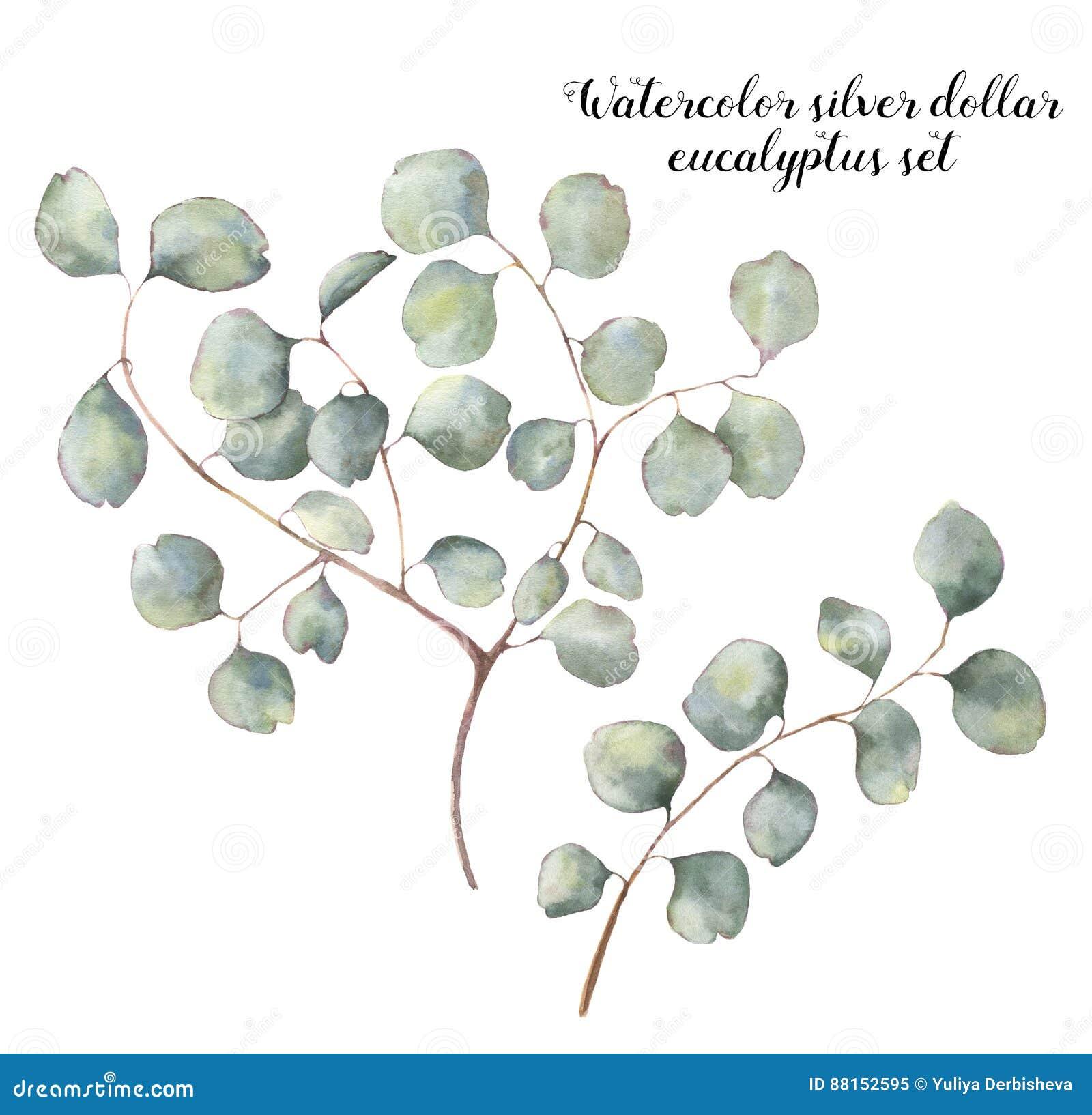 Eukalyptussatz des silbernen Dollars des Aquarells Handgemalte Blumenillustration mit runden Blättern und den Niederlassungen an