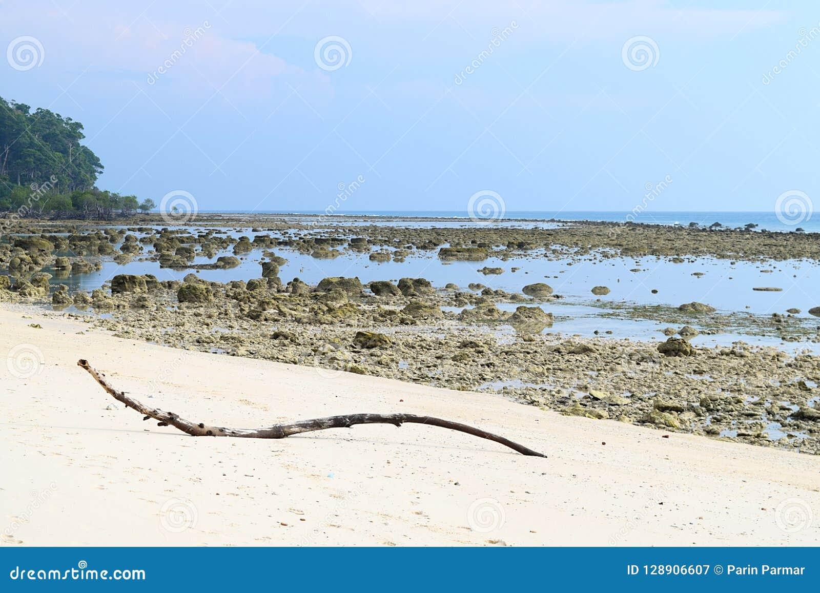Eulittoral strefy zmierzchu punkt w czasie odpływu morza, Laxmanpur, Neil wyspa, Andaman - Skalista i Piaskowata Nieskazitelna pl