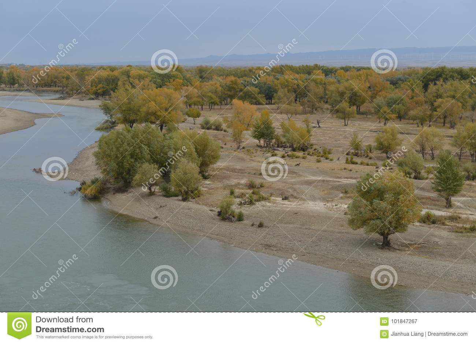 Euphrates Poplar Forests naast Irtysh-Rivier in Xinjiang China
