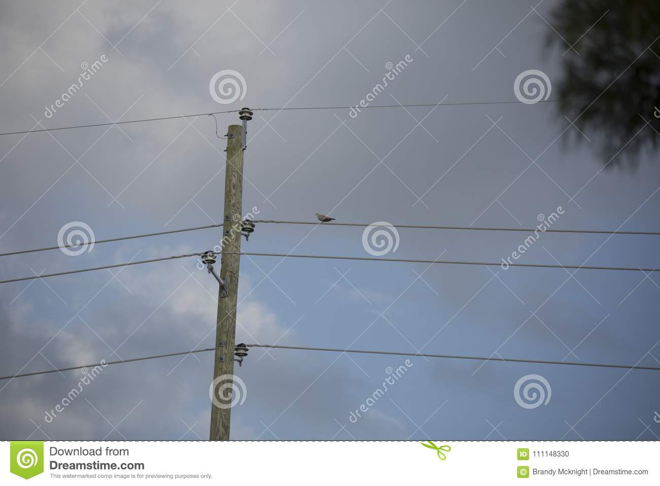 Eurasian Collared-Dove On A Wire Stock Photo - Image of backyard ...