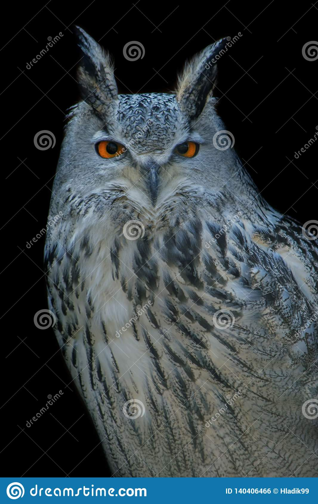 Eurasian eagle-owl, bird, black, eye, portrait