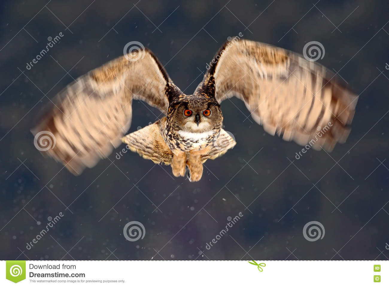 Eurasian Eagle Owl fly hunting during winter surrounded with snowflakes, action flying scene with bird, animal in the nature habit