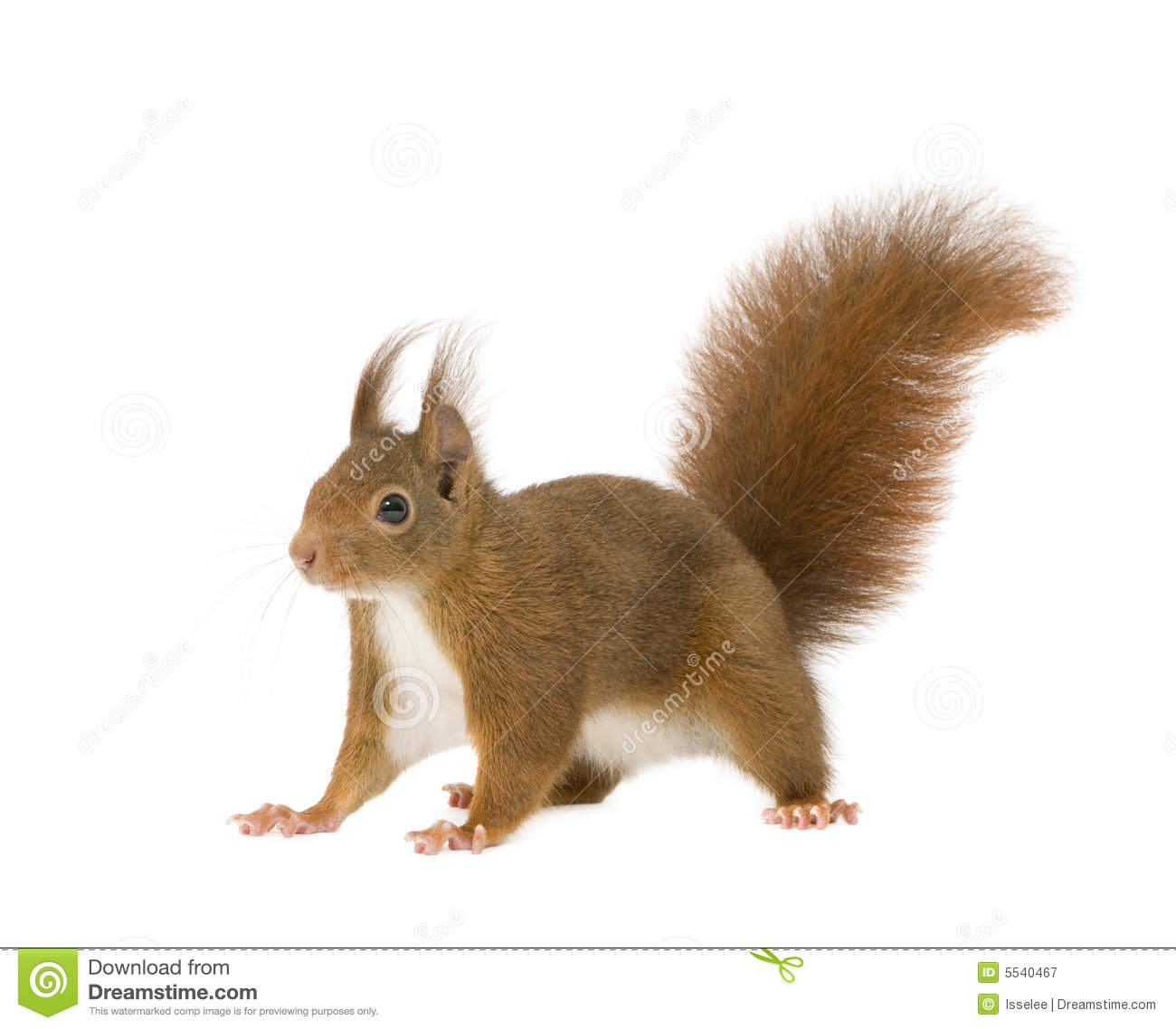 cute squirrel free background - photo #30