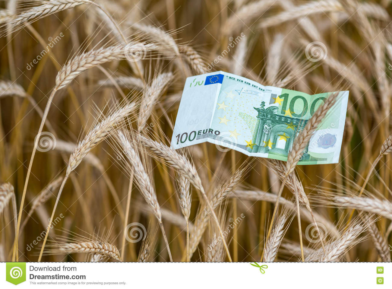 Euro banknote and wheat