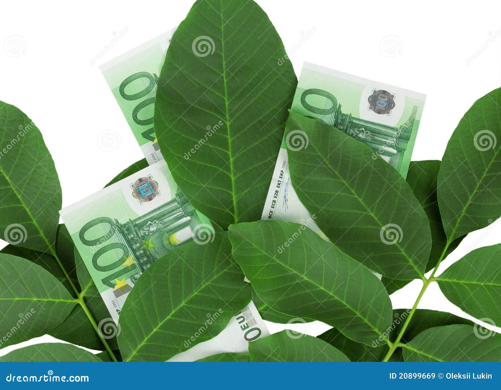 Euro en las hojas