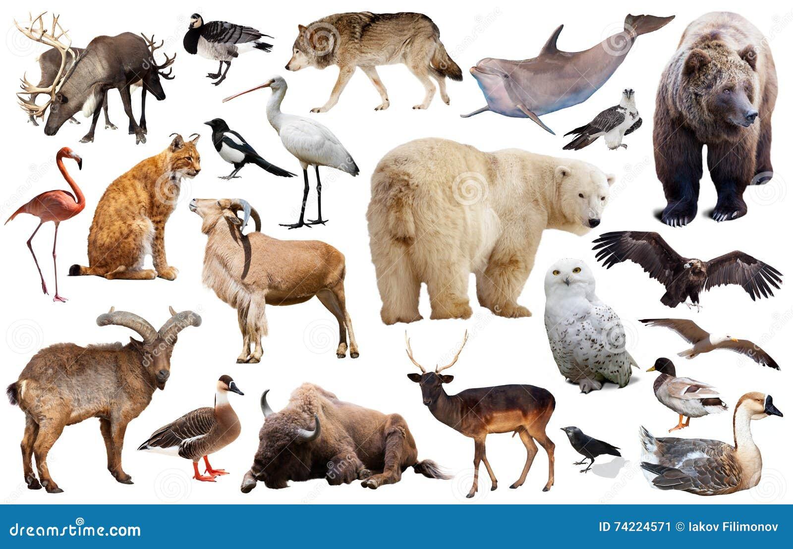 Europa Tiere