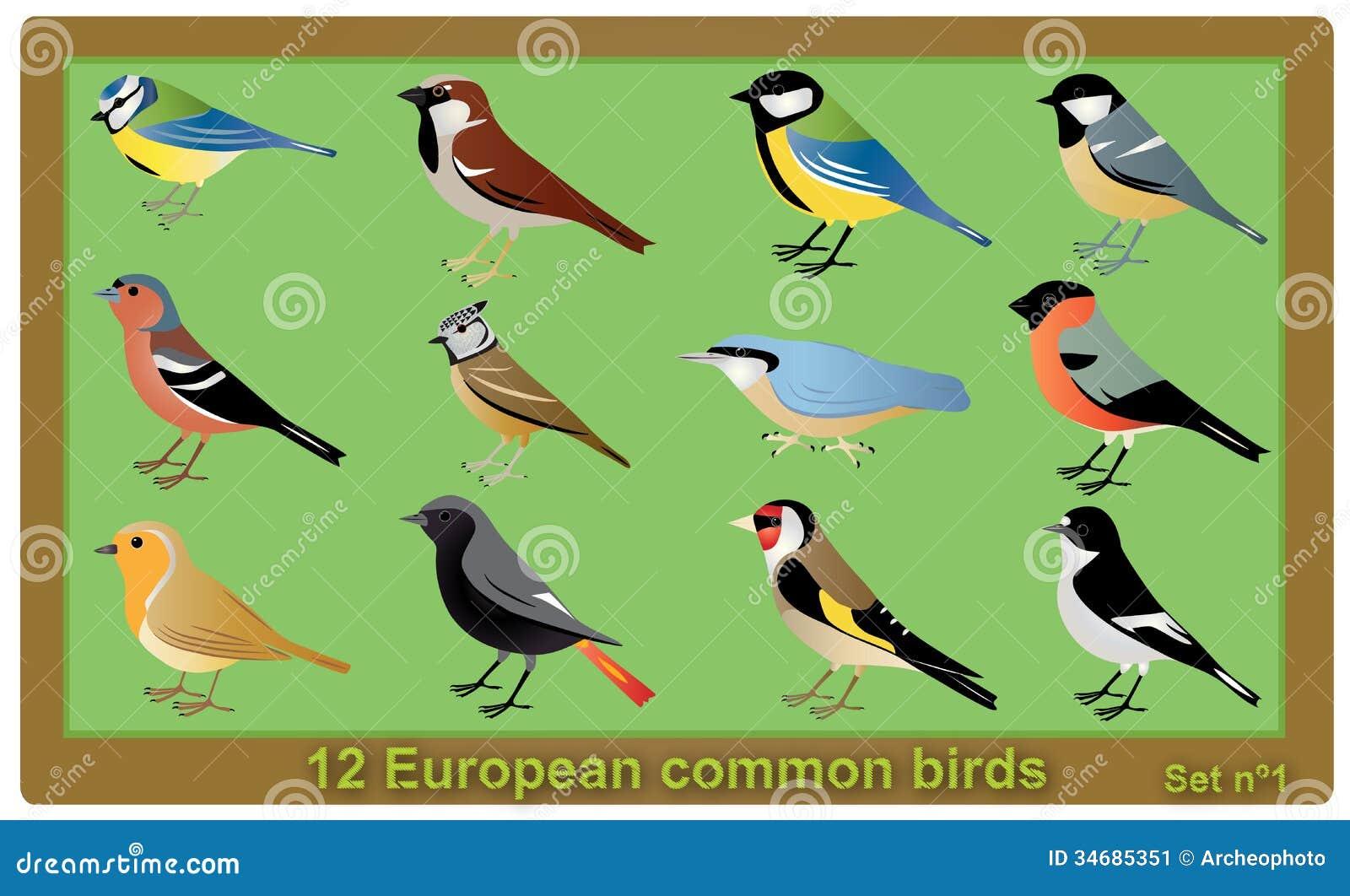 Stock Image European Common Birds Vector Set Crested Tit Piedflycatche...