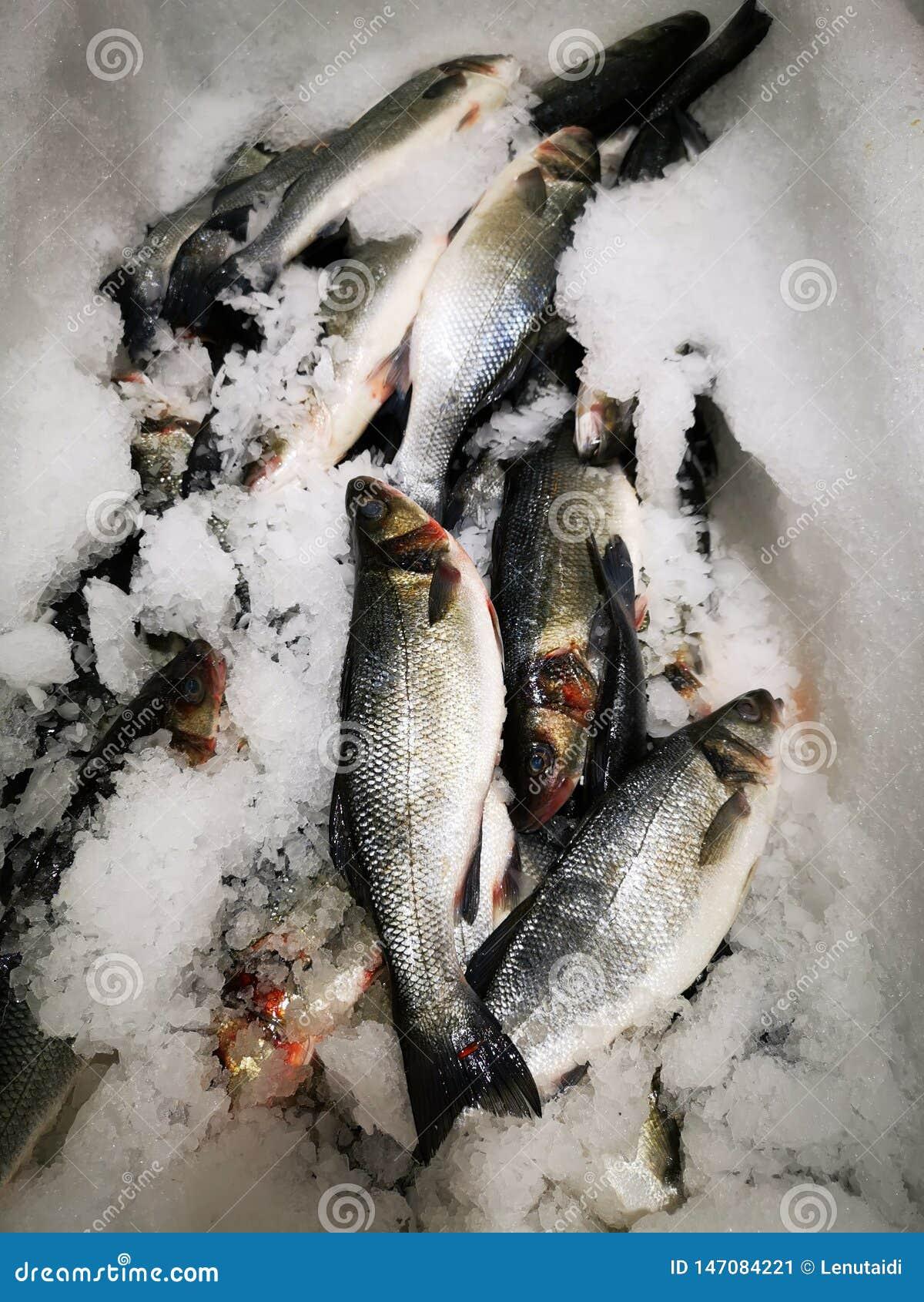 European sea bass on ice