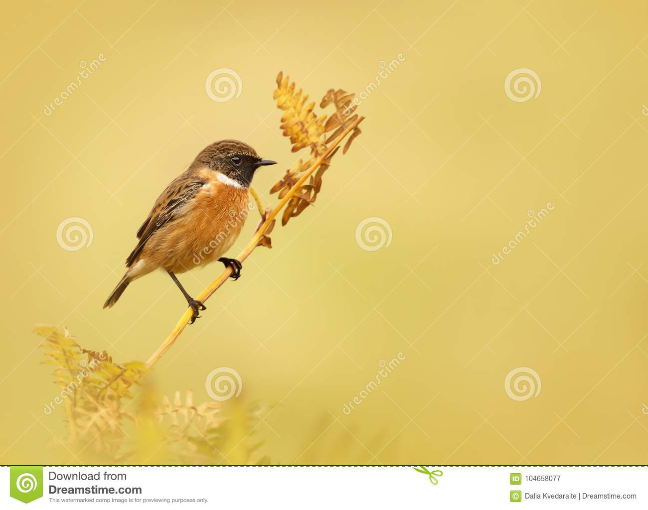 European stonechat perching on a fern branch