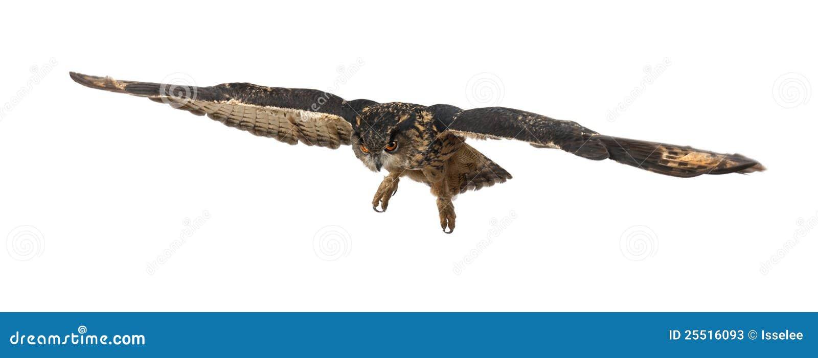 Europees-Aziatische adelaar-Uil, bubo Bubo