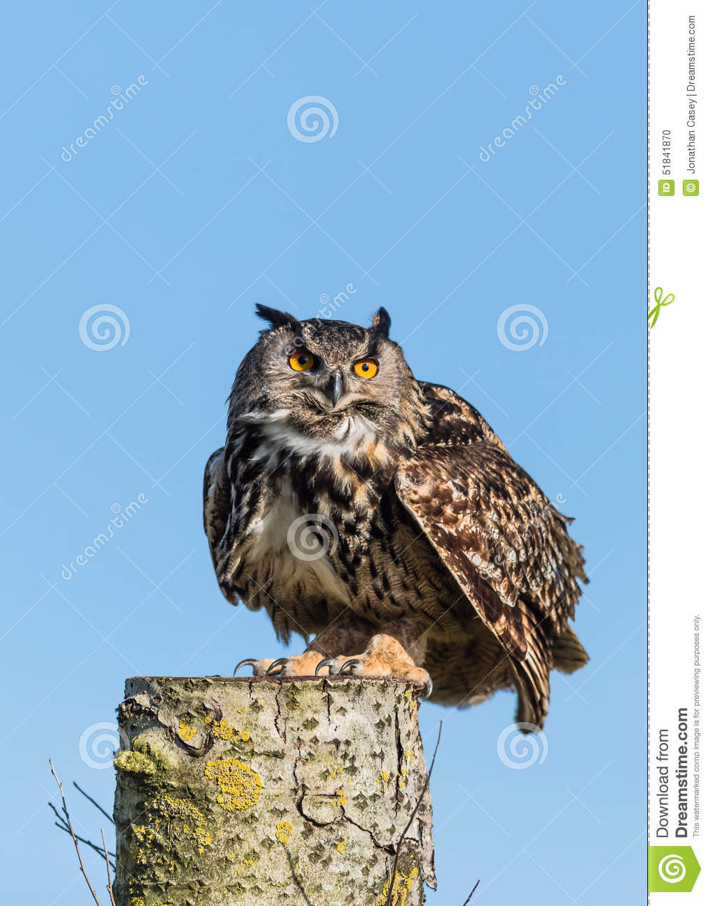 Europees Eagle Owl On Log