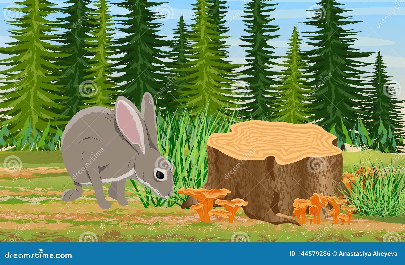 Europeisk hare som sitter nära stubben i de prydliga träden för skog och gräset, kantarellchampinjoner