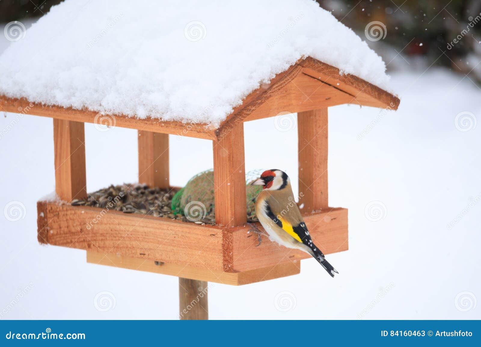 Europeisk steglits i enkel fågelförlagematare