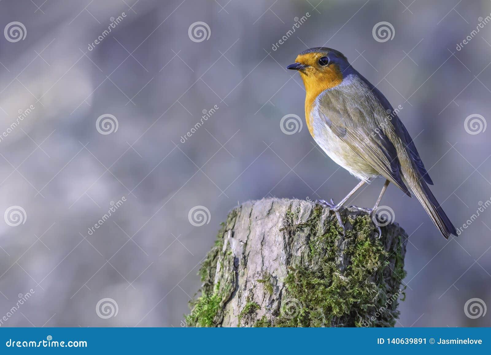Europese Robin streek op boomboomstam neer