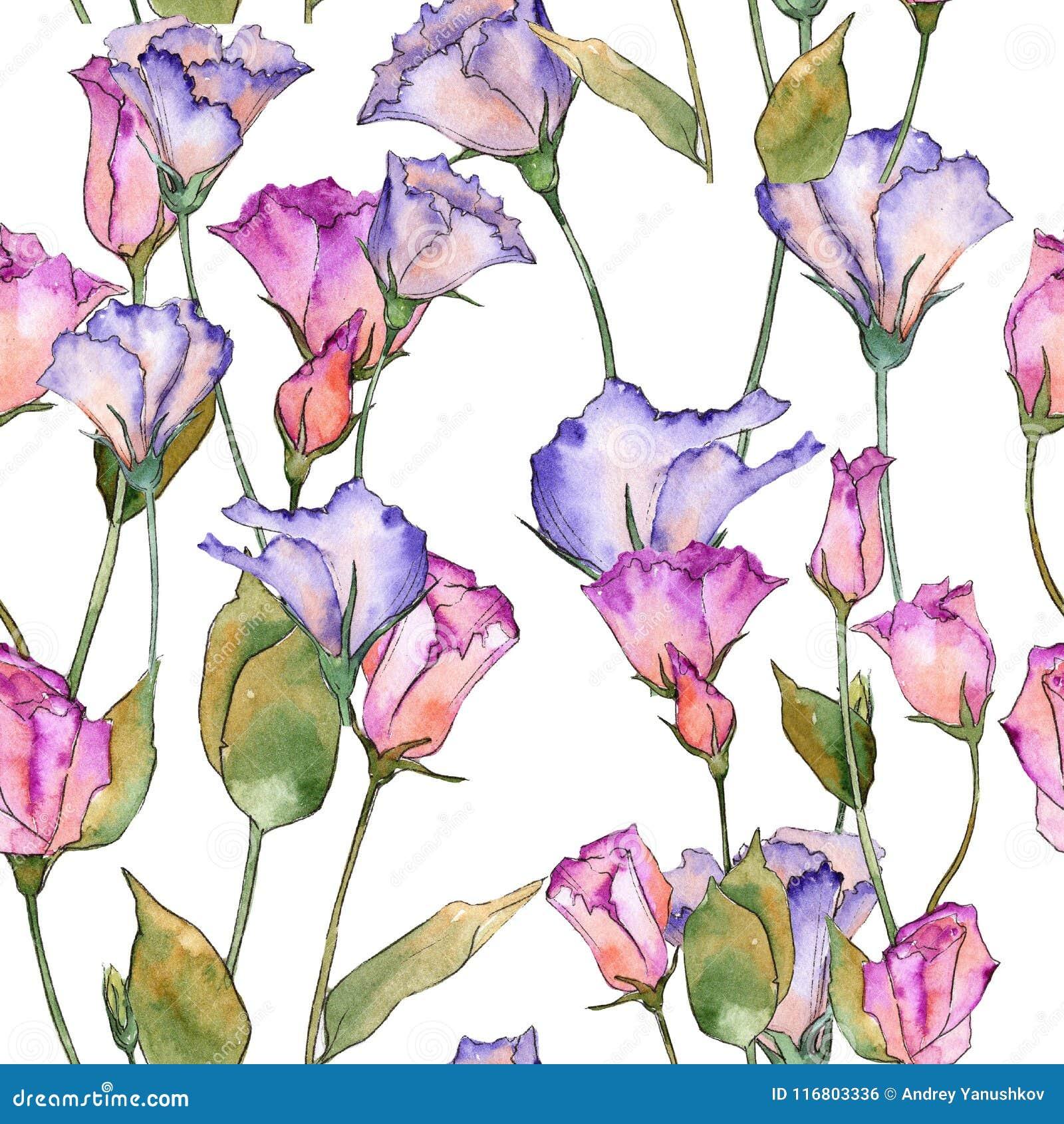 Eustoma rosa e porpora Fiore botanico floreale Modello selvaggio del wildflower della foglia della molla