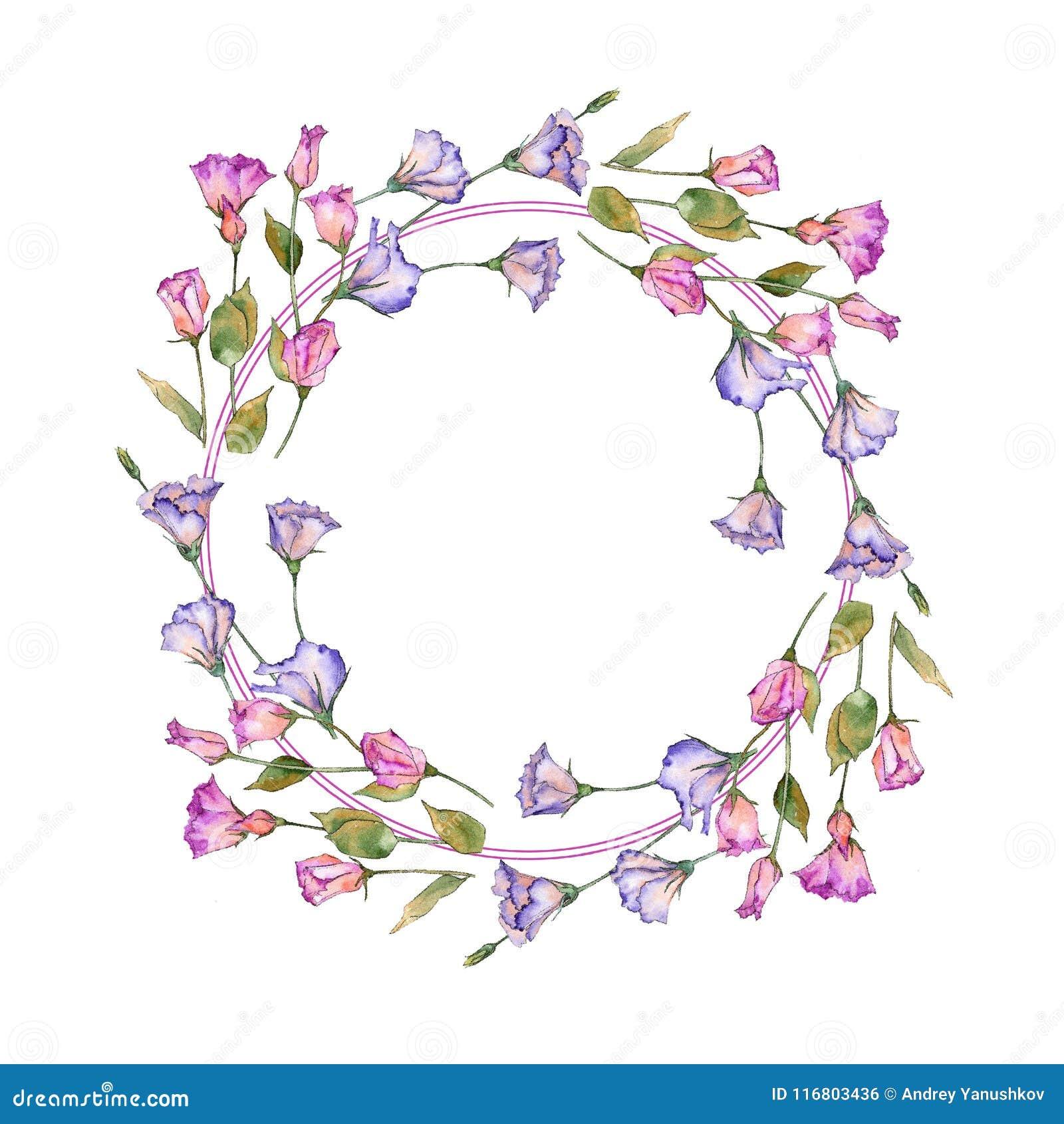 Eustoma rosa e porpora Fiore botanico floreale Struttura selvaggia del wildflower della foglia della molla