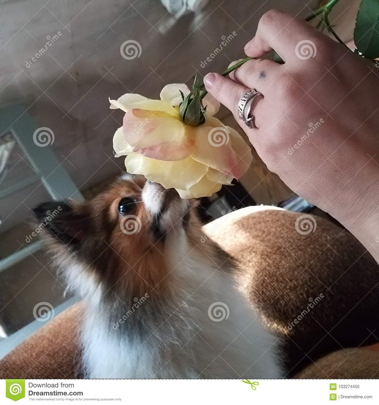 Evan dogs need to Smell the roses sometimes